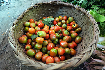 Small organic tomatoes in basket in Asia