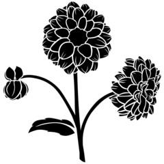 Dahlia flower silhouette