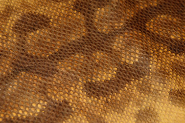 Background of snake skin leather texture