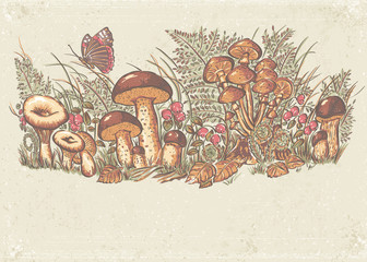 white mushrooms, chanterelles and oyster mushrooms