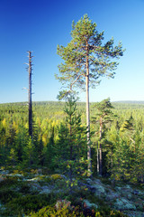 A forested hilly landscape in central Karelia