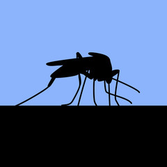 black silhouette of biting mosquito