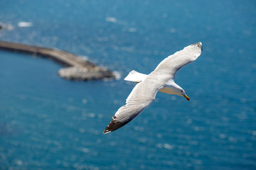 Sea gull at port of Castelsardo, Sardinia, Italy