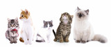 Fototapeta Collage of cute cats isolated on white
