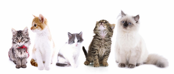 Collage of cute cats isolated on white