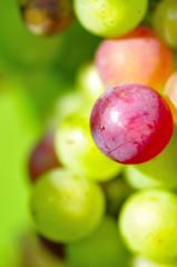 Grains de raisins
