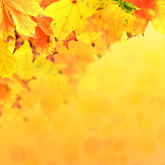 Vivid autumn leaves background