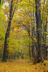 Trees in the autumn forest among  yellow leaves