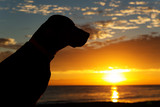 dog at sunrise - 70226385