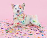 Painted Pooch poster