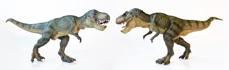 A Tyrannosaurus Pair on a White Background