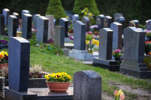 Leinwandbild Motiv Gräber im Frühling