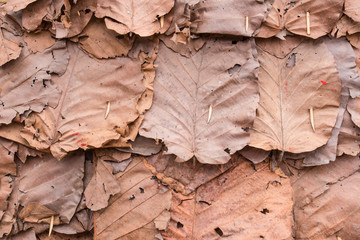 dry leaves texture background