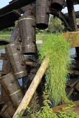 Altes mit Gras bewachsen