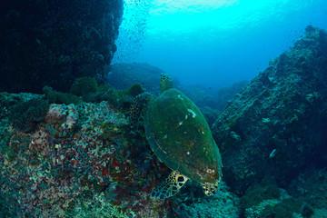 Pretty back of a  sea turtle
