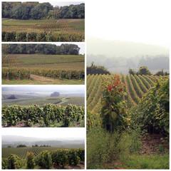 collage vignes