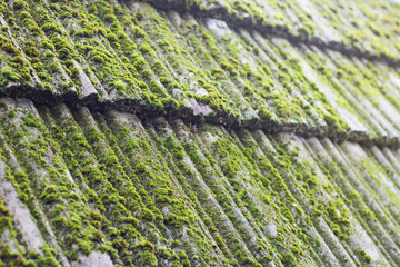 moss growing on old roof tiles