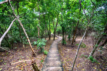 Stairs through the jungles