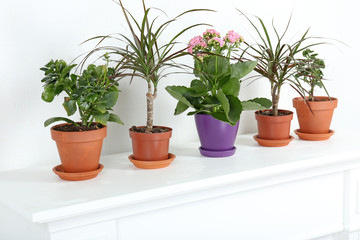 Row of pots with different flowers on white shelf in living