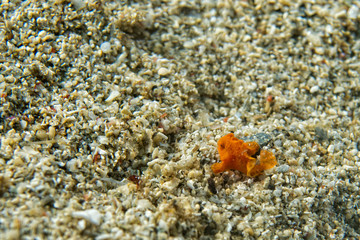 baby frog fish the smallest on the world