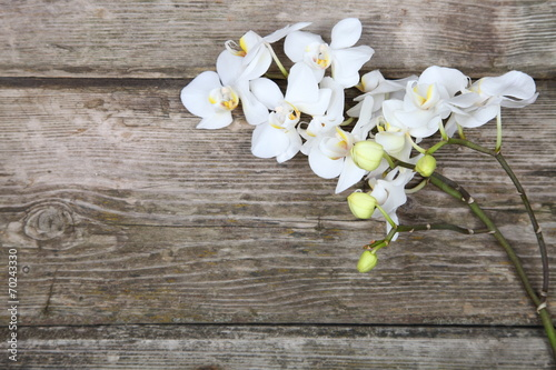 Keuken foto achterwand Lilac White orchid(Phalaenopsis)