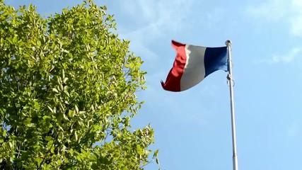 French flag - green tree - blue sky - sunny