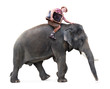 cheerful tourist rides on an elephant