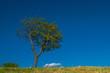 albero in primavera