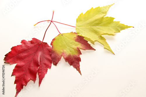 canvas print picture Herbst -Farben