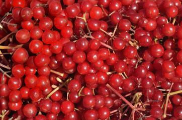 Berries of arrow-wood 19