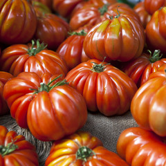 Lufa Farms Beefsteak Tomato. Market stall with lots of tomatoes