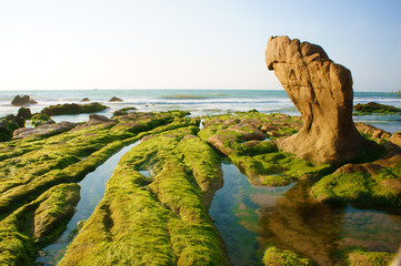 Impressive landscape with green moss, stone on beach