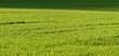 Rural farming