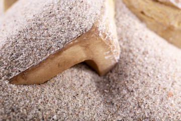 Bones in sand close up
