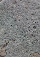 lichen colony on rock
