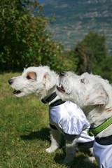 hunde im fussballtrikot