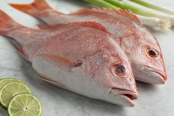 Fresh red snappers