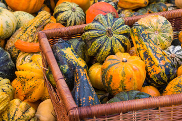 Basket Filled With Various Pumpkins