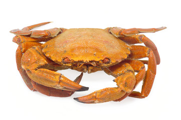 crabs isolated