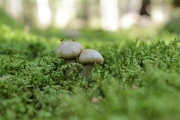 paire de champignons