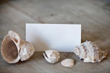 Blank Place Card Amongst Seashells