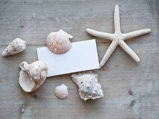 Blank Note with Assortment of Seashells