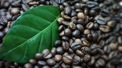 Coffee beans. Coffee tree leaves (Gently rotate).