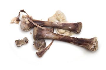 bone on the white background