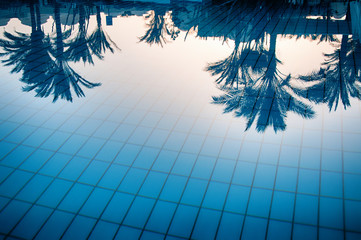 Reflections of palm trees in a swimming pool