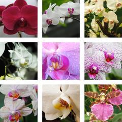 Neun Blumen und Orchideen