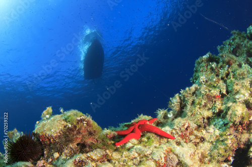 Coral reef, starfish and boat - 70259322