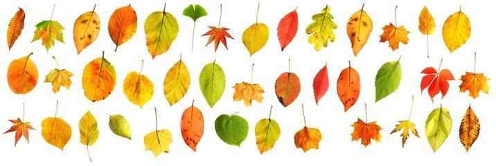 gemischte bunte Herbstblätter freigestellt