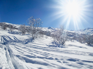 Snowy landscape with sunshine and trees in the Alps, France