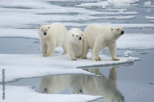 Aluminium Ijsbeer Polar Bear& Two Yearling Cubs